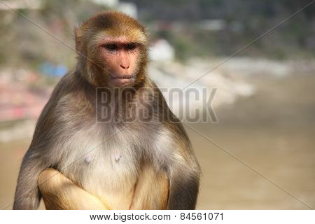 a monkey having serious thoughts