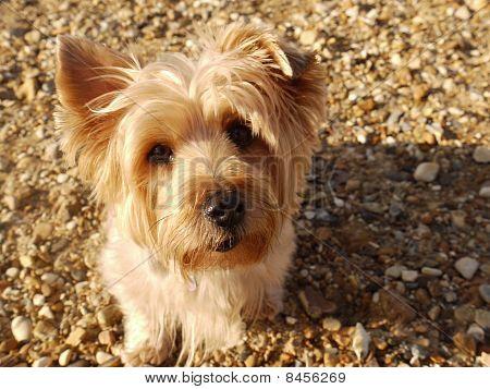 Windswept dog on the beach