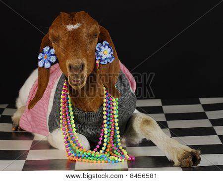 Female Goat