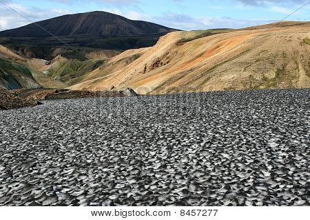 Landscape with ash