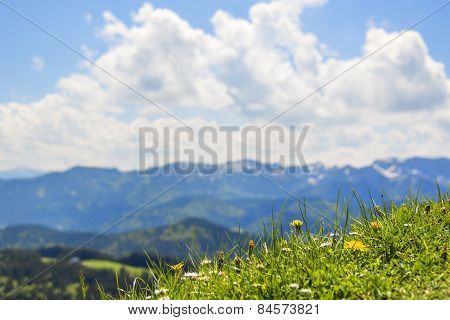 Meadow With Alps Background