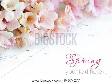 Pink Freesia Flowers