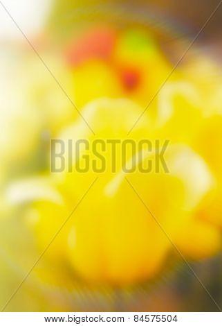 Tulips Blurred