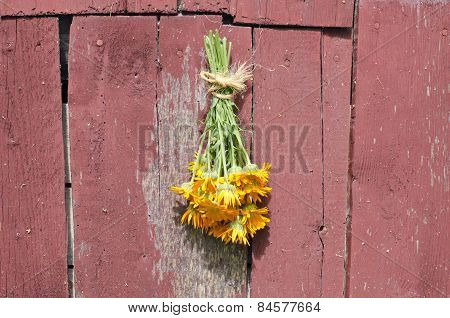 Fresh Medical Calendula Marigold Flower Bunch On Old Barn Wall
