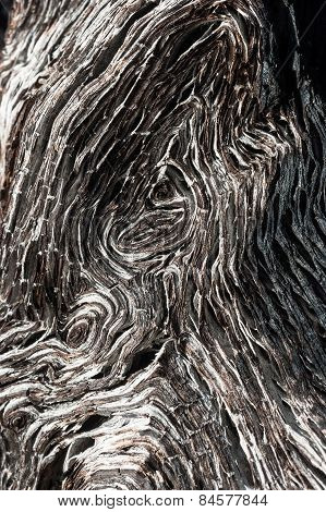 close up of ancient bog-wood texture