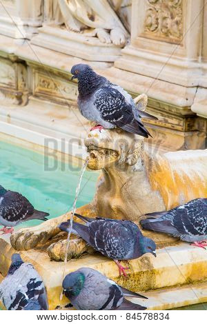 Pigeon On The Fountain Sculpture