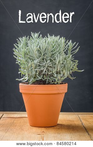 Lavender In A Clay Pot On A Dark Background