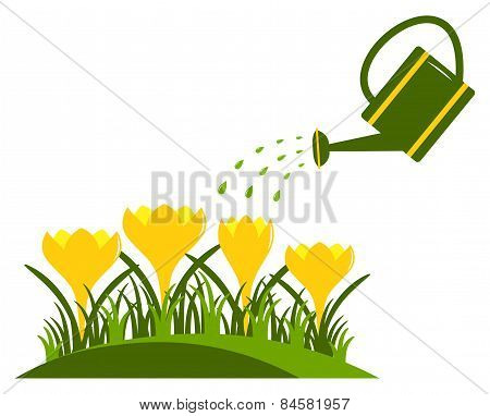 Crocuses And Watering Can