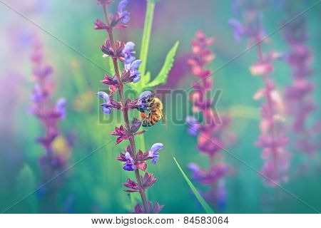 Bee - honeybee on purple flower