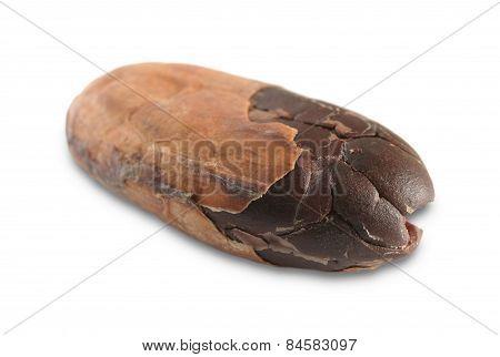 Cocoa Seed