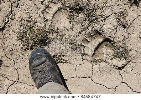 bear foot print