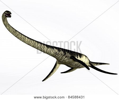 Elasmosaurus Reptile On White