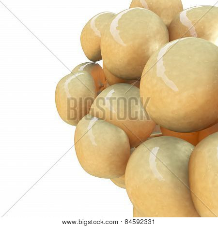 Fat Cells - 3D Rendered Illustration