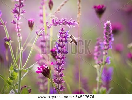 Beautiful meadow with wild flowers