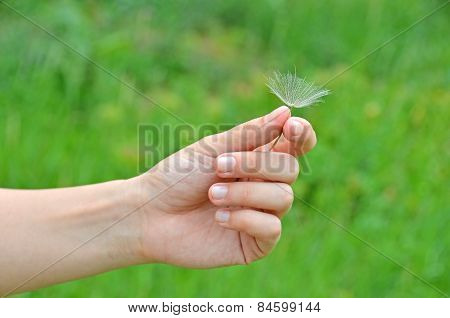 Dandelion seed in hand