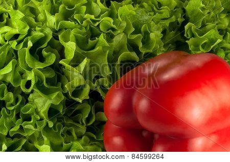 Red Bell Pepper On Green Lettuce