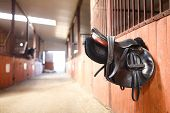 stock photo of girth  - A leather saddles horse in a stable - JPG