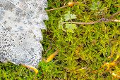 foto of vegetation  - macro picture of vegetation background grass moss natural - JPG