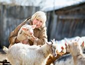 foto of pig  - Adult female farmer holding a small pig - JPG