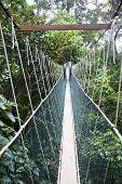 foto of canopy  - Canopy walkway - JPG