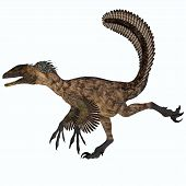 picture of carnivores  - Deinonychus was a carnivorous dinosaur that lived in the Cretaceous period of North America - JPG