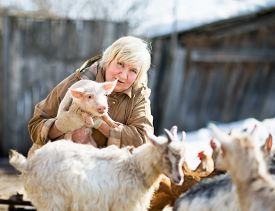 pic of pig  - Adult female farmer holding a small pig - JPG