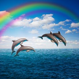 stock photo of bottlenose dolphin  - pack of  of jumping dolphins,beautiful seascape with rainbow with deep  ocean  waters and cloudscape ** Note: Visible grain at 100%, best at smaller sizes - JPG