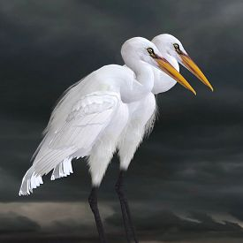foto of aquatic animals  - The Great Egret is a saltwater and freshwater wader hunting fish frogs and small aquatic animals - JPG