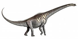 picture of herbivore  - Sauroposeidon was a herbivorous sauropod dinosaur that lived in the Cretaceous Period of Oklahoma in North America - JPG