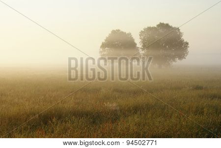 Hazy Morning Over Meadow