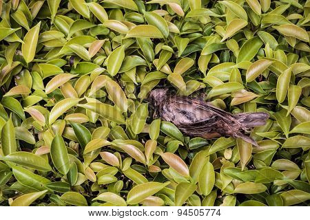 Remains of bird on field of green bush