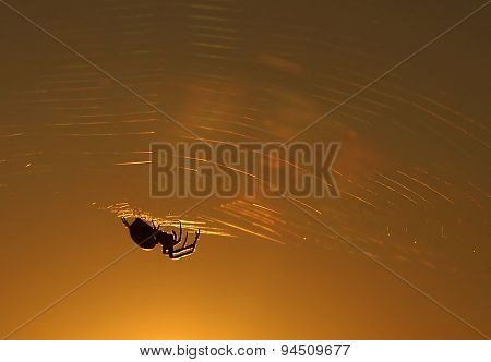 A spider sits on its spiderweb, silhouette, golden hour