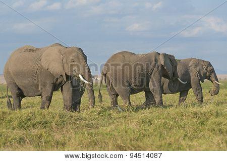 Land Of Elephants