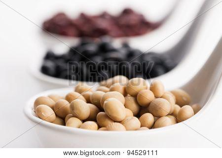 Tricolor Soybeans
