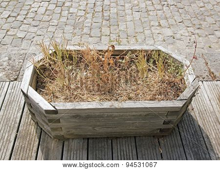 large flower pot containing dried flowers. flowerpot left without water