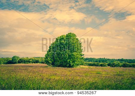 Big Green Tree On A Field