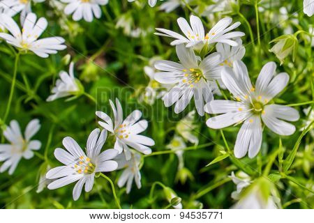 Wildflowers In The Nature