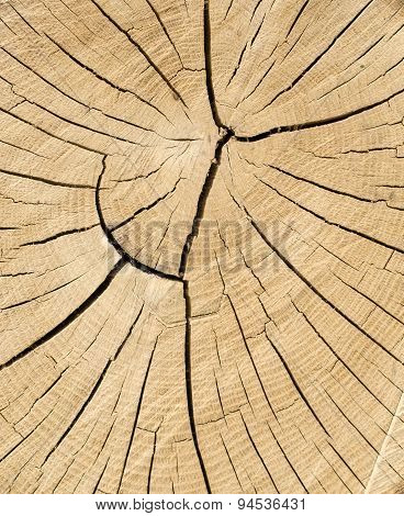 Cut Tree Cracked Rings