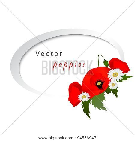 Vector white background with chamomile and poppies