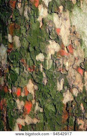 Tree Surface