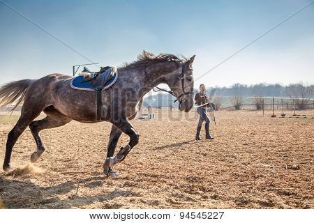 Young woman training a horse.