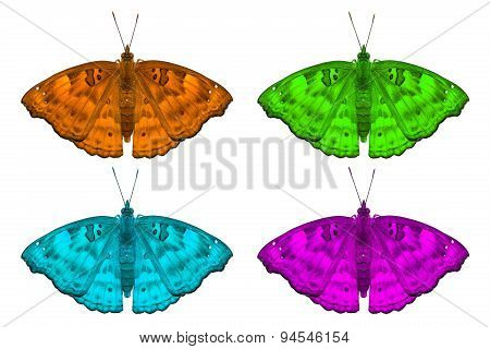 Fancy Color Black Prince Butterflies