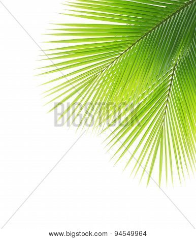 Green Coconut Leaf Frame
