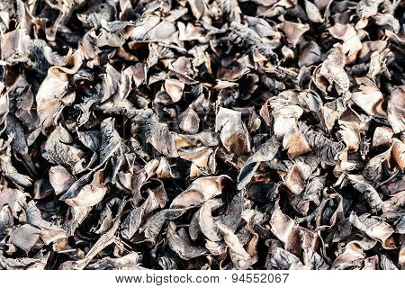 dark dried leaves of plant kept for drying to be later used as natural fertilizer