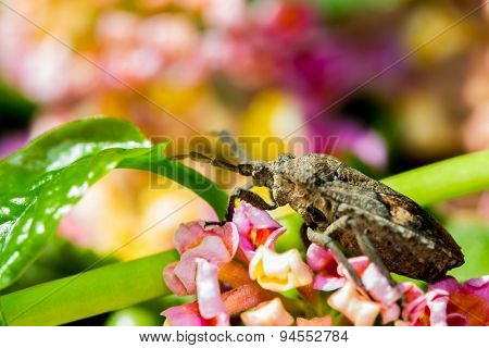 Shield Bug On Nature Background
