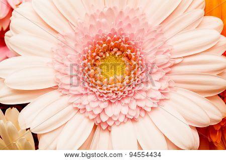 Flower A Close Up