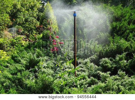 Watering subtropical flowering plants