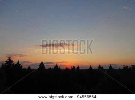 Sunset in the coniferous forest