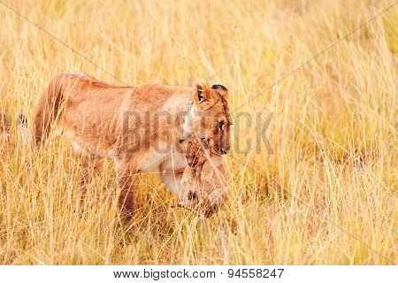 Female Lion With Cubs In Masai Mara