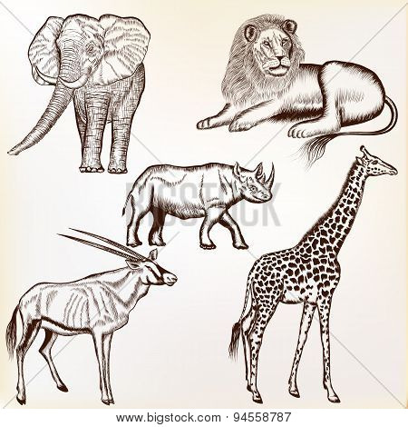 Vector Set Of Hand Drawn Detailed  African Animals With Calligraphic Elements